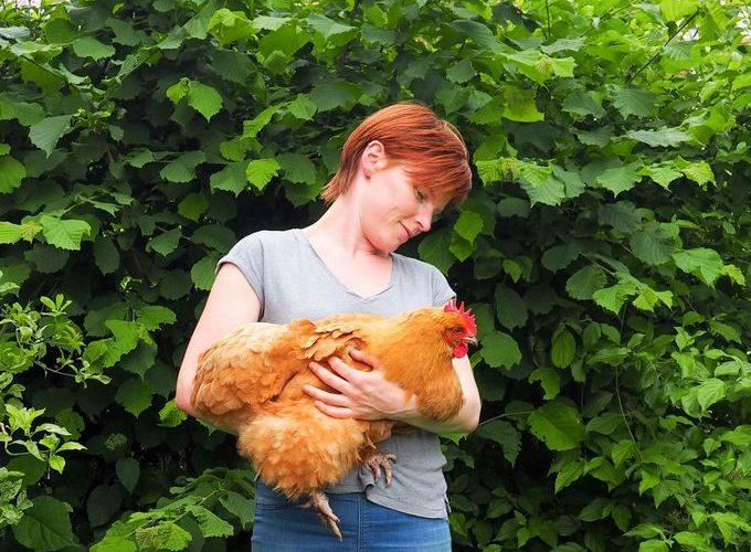 Les poules #3 : le choix de la race