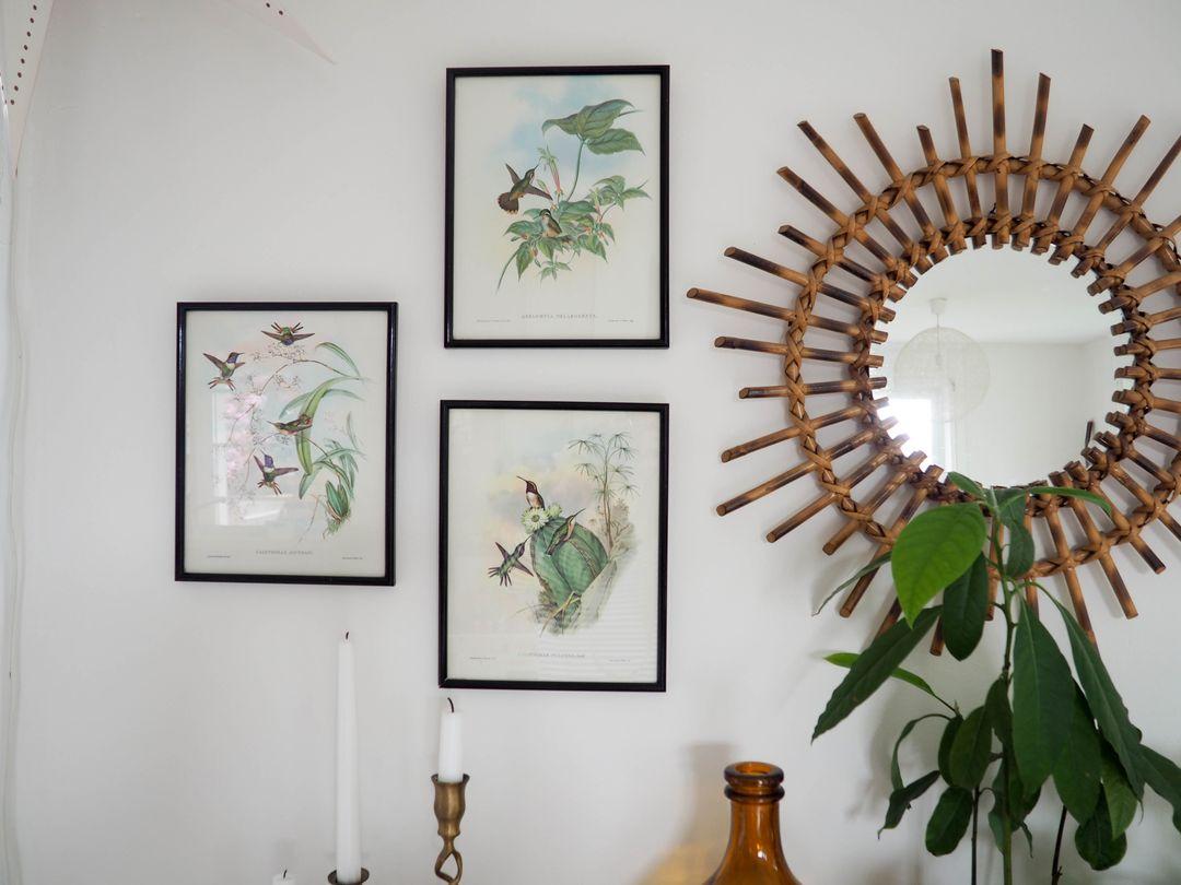 gravures oiseaux vintage illustrations buffet plantes